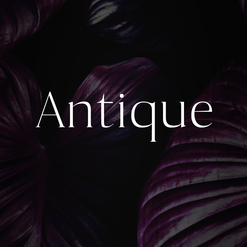 Antique - Luxury Serif Typeface Font